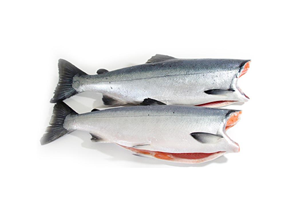 Cá hồi Chile (nguyên con)