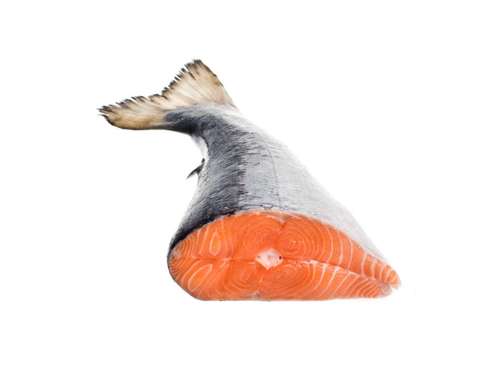 Cá hồi Chile (lấy đuôi)