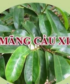 la_mang_cau_xiem3-min
